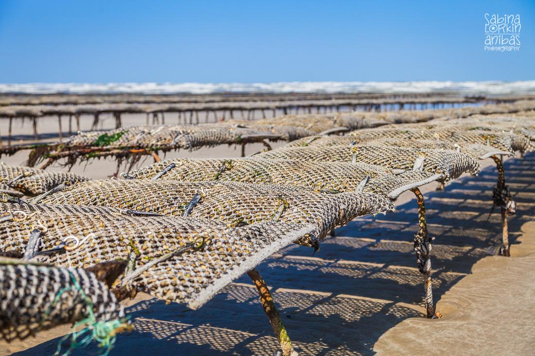 Photographe en Normandie - Découvrez Utah Beach à marée basse - La pêche à pieds