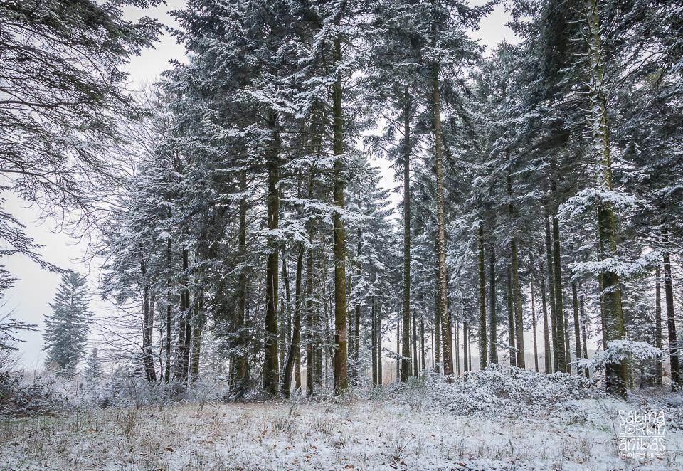 Découvrez des photos de la Normandie sous la neige par Artisan photographe Sabina Lorkin - Calvados