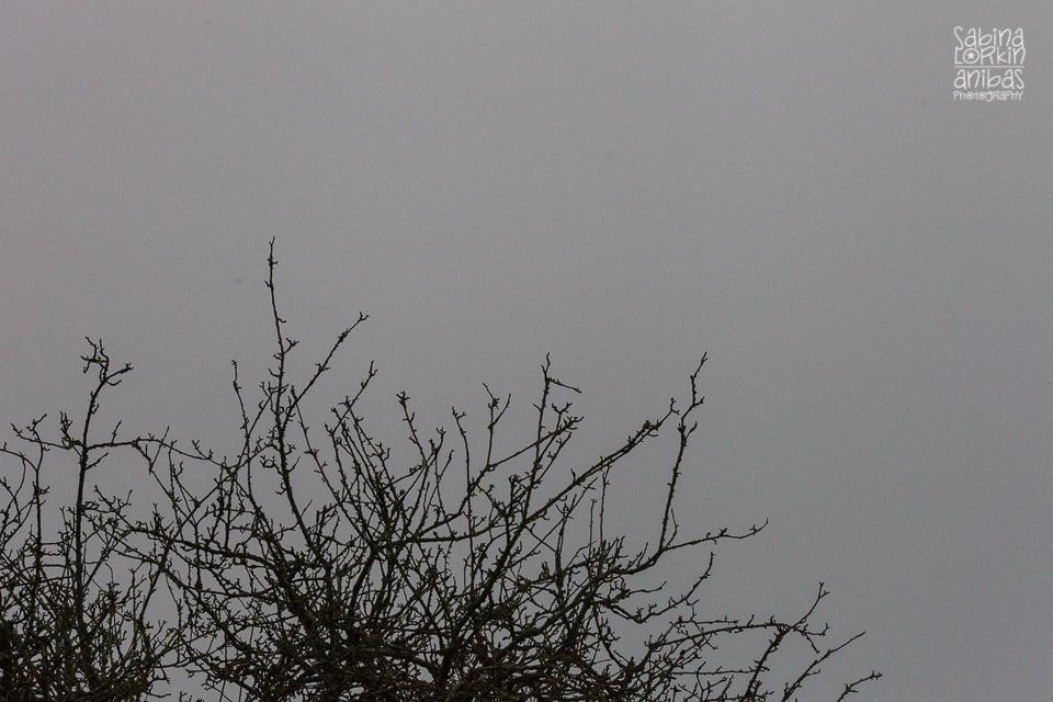 Eclipse Solaire 2015 en Normandiell