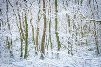 Anibas-Photography-photos-Normandie-sous-la-neige-5687