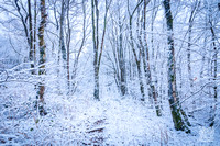 Anibas-Photography-photos-Normandie-sous-la-neige-5665