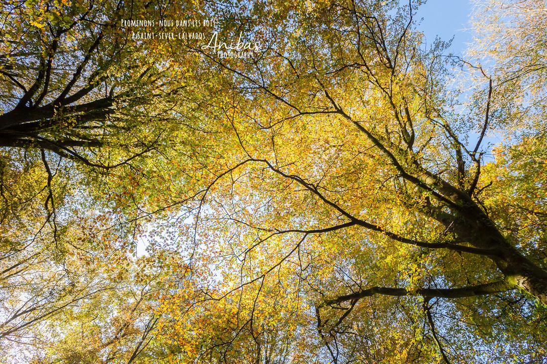 Promenons-nous dans le bois de Saint-Sever-Calvados en automne - Photos par Anibas Photography