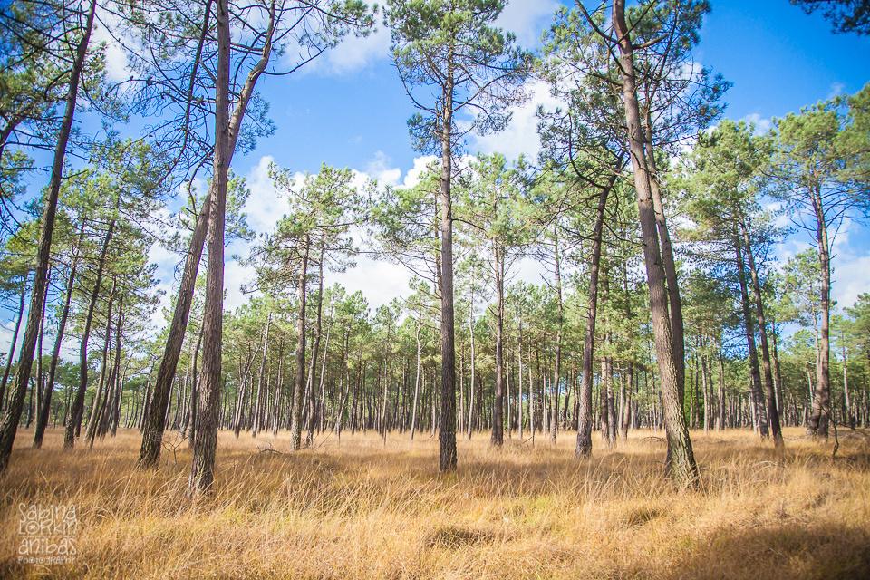 Normandie - La forêt à Pirou - Une promenade insolite - Manche - Tourisme