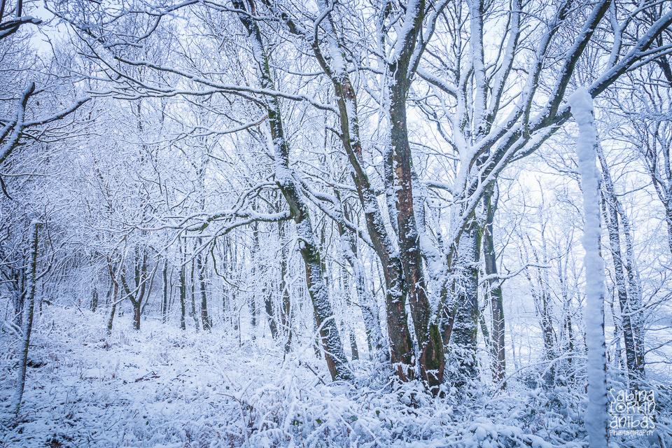 Découvrez des photos de la Normandie sous la neige par Artisan photographe Sabina Lorkin - Manche