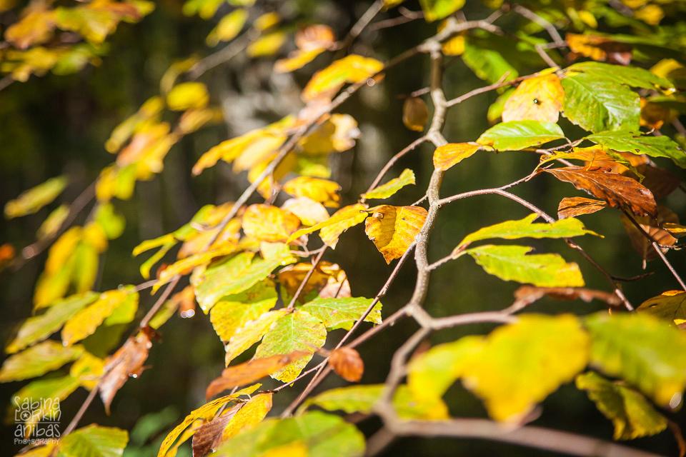 Découvrez les belles couleurs d'automne en Normandie dans la forêt - La Maison de la Forêt - Office de Tourisme Balleroy-Le Molay Littry
