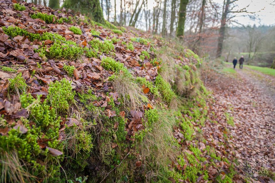 Découvrez la forêt de Saint-Sever-Calvados en hiver avec photos de la promenade d'artisan photographe Sabina Lorkin