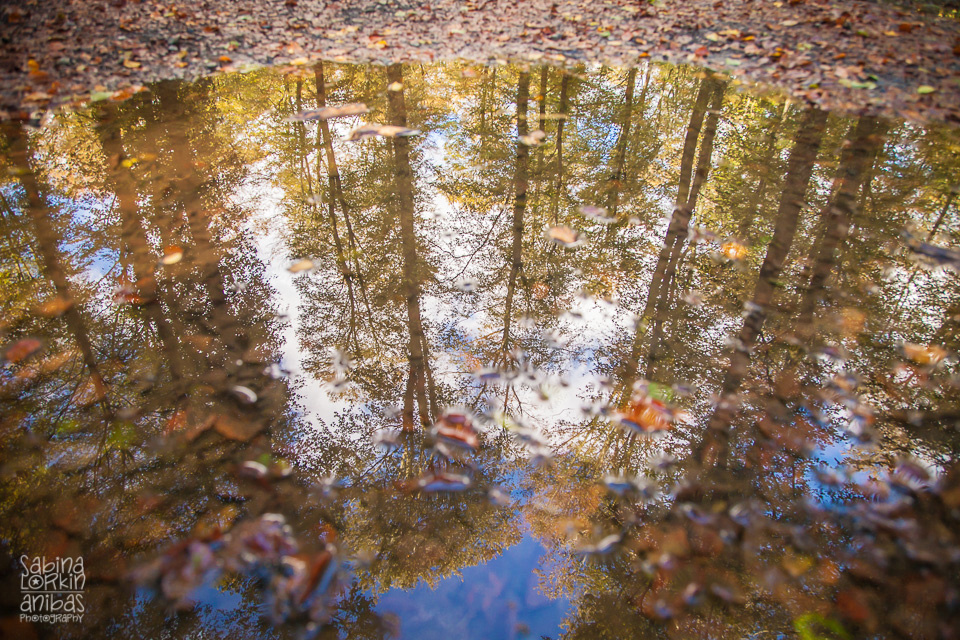 IMG_4156-automne-normandie-cerisy-la-foret