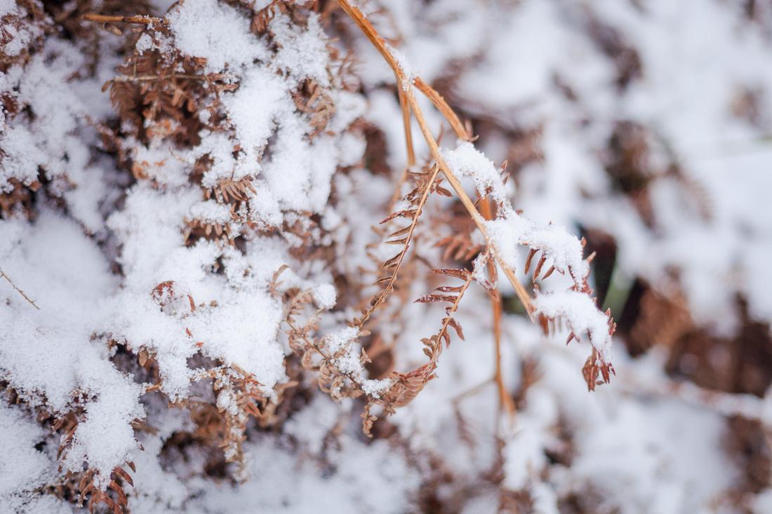 Découvrez les photos du saupoudrage de neige arrivé sur la Manche, Normandie