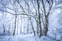 Anibas-Photography-photos-Normandie-sous-la-neige-5671