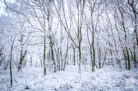 Anibas-Photography-photos-Normandie-sous-la-neige-5686